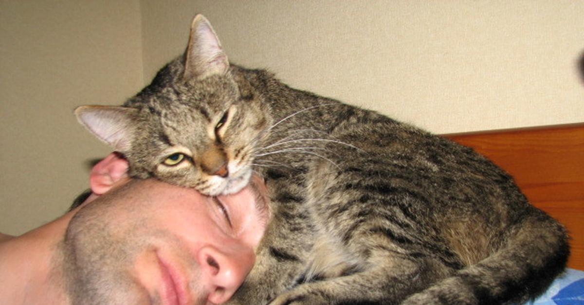 На что готова кошка, чтобы привлечь ваше внимание?