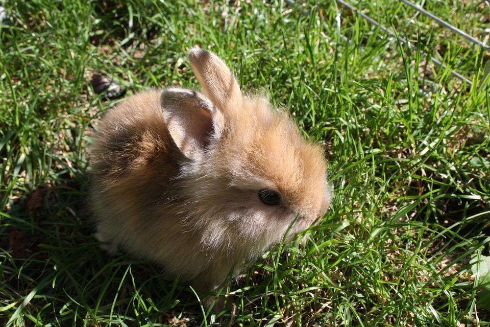 Самые маленькие кролики