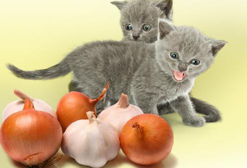 Какие запахи не переносят кошки