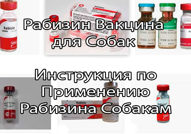 Препараты для вакцинации собак и кошек