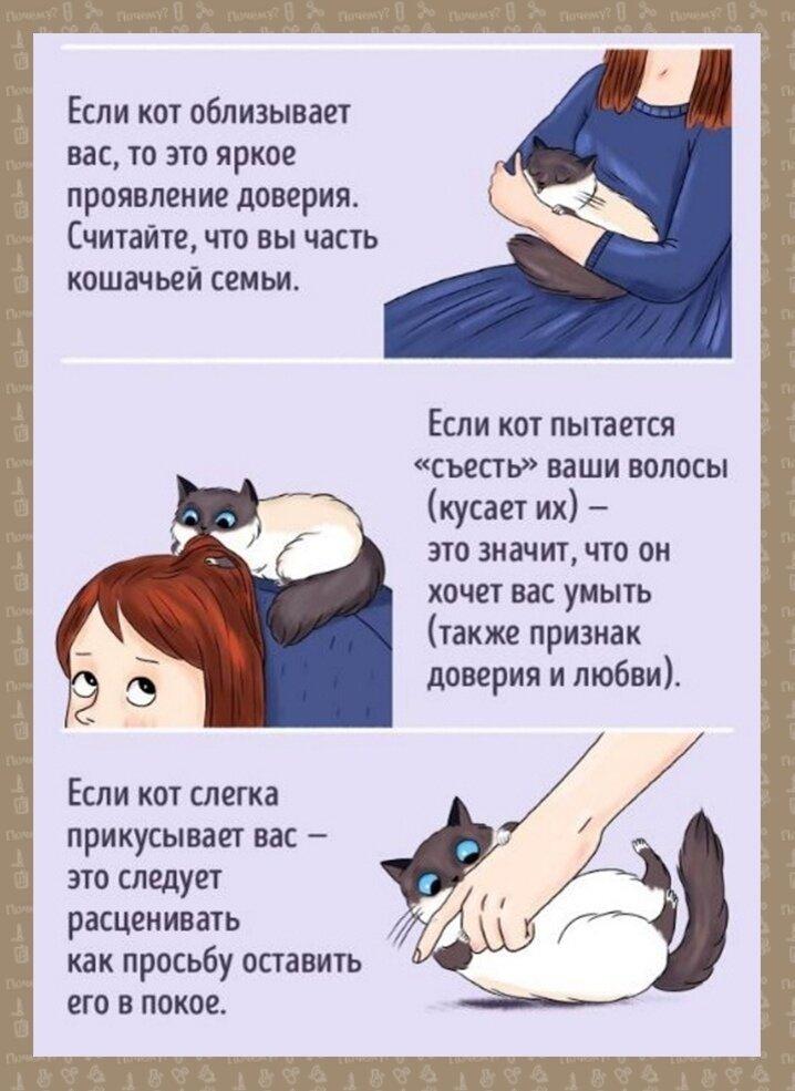 Как понять вашего котенка | хиллс