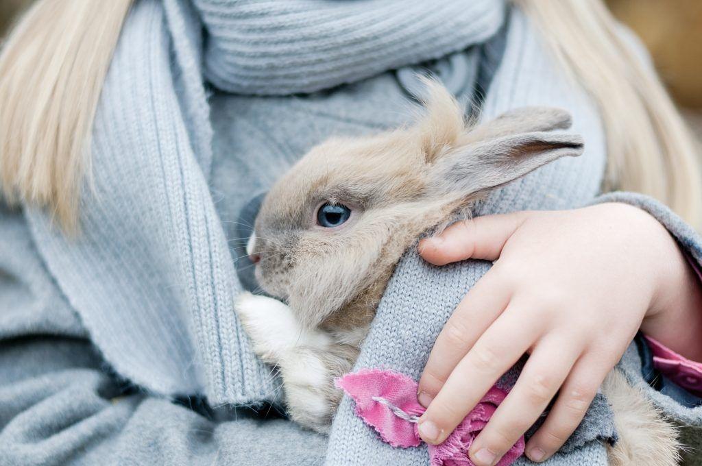 Породы и виды декоративных кроликов