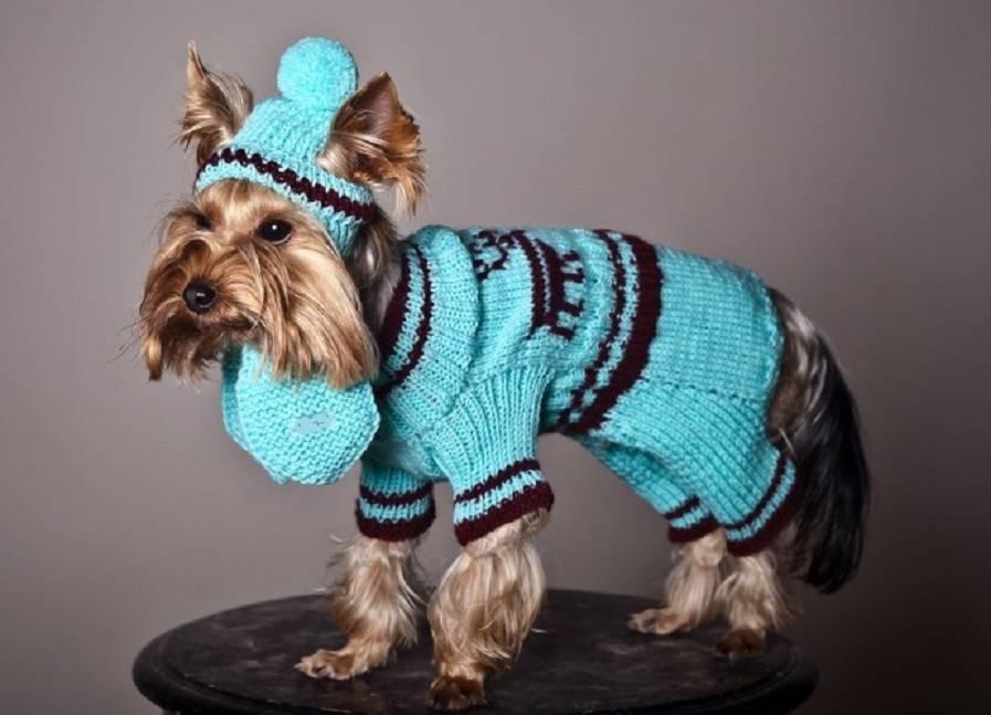 Вязаная одежда для маленьких собак — схемы крючком
