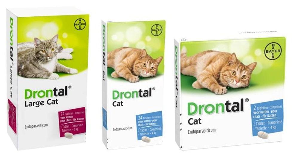 Дронтал для кошек — советы ветеринаров и владельцев кошек по применению препарата (115 фото и видео)