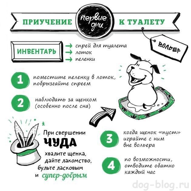 Как приучить щенка к пеленке в 1,2,3 месяца: быстрые и эффективные способы