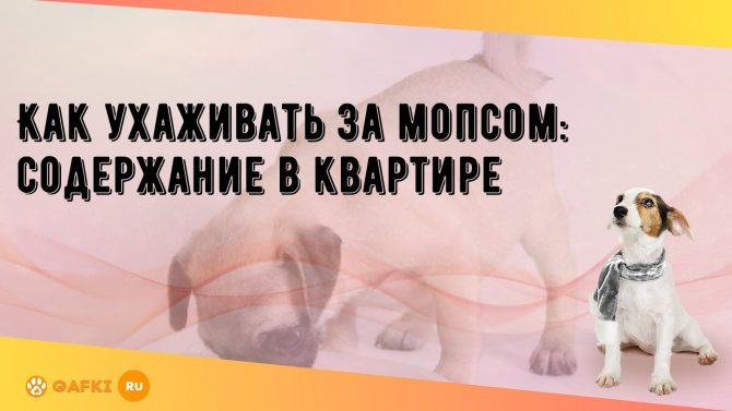 Правила ухода за собакой при содержании в квартире: как нужно содержать, условия