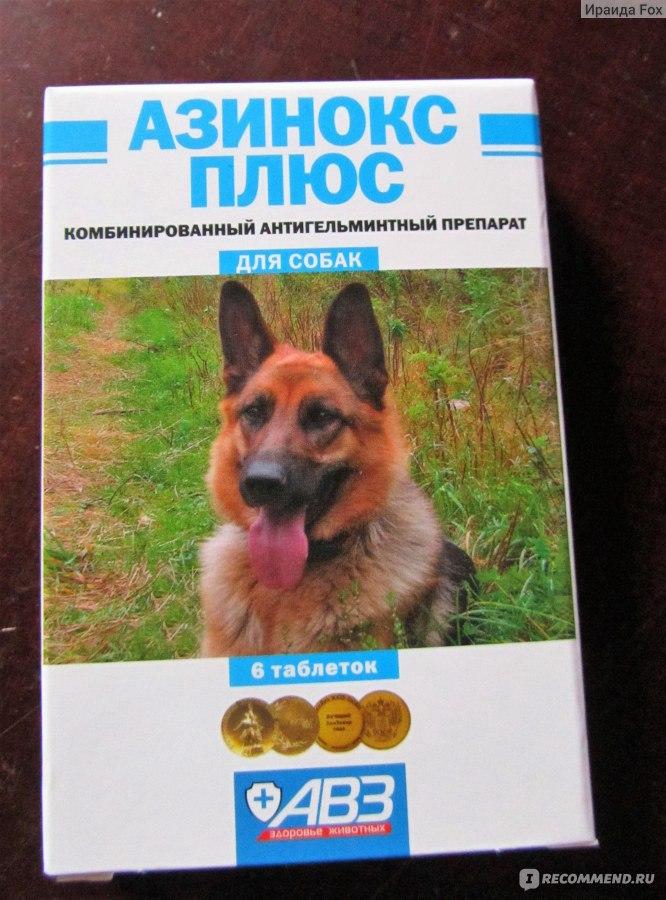 Как дать лекарство кошке, собаке и прочим животным