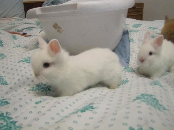 Как можно назвать кролика?