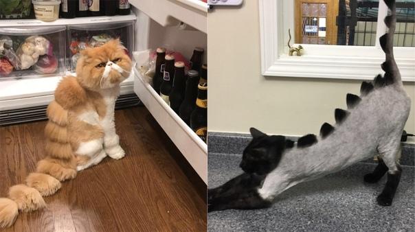 Как подстричь кота в домашних условиях ножницами