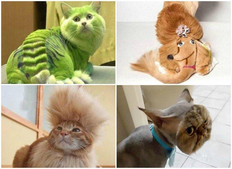 Как подстричь кошку в домашних условиях: инструменты, процесс, рекомендации владельцу