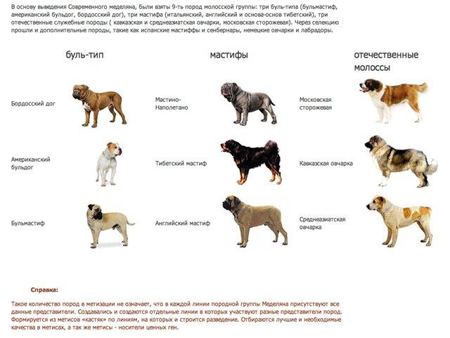 Все породы собак с фотографиями и названиями: фото, краткое описание характера