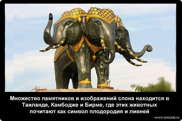 Африканский слон интересные факты