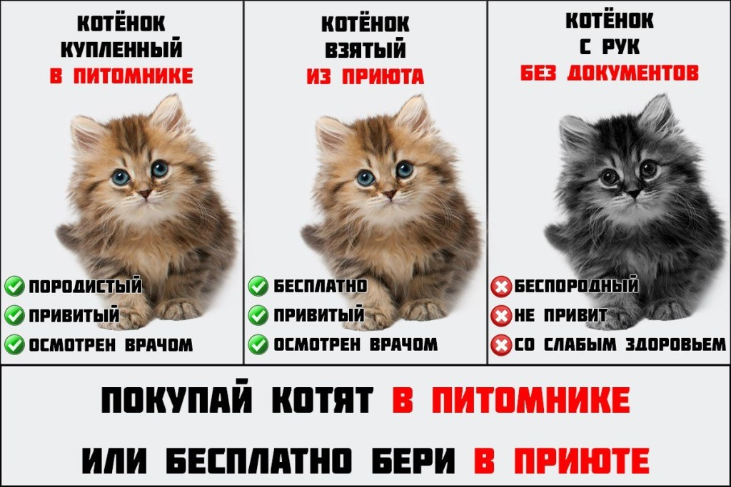 Полный список того что необходимо для маленького котенка в новой квартире