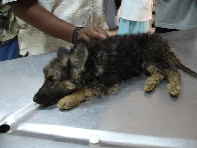 Укус собаки. заражение бешенством. стадии бешенства. профилактика и прививка