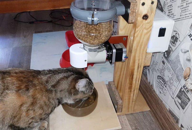 Автоматическая кормушка для кошек: советы по выбору со сравнением популярных моделей кормушек