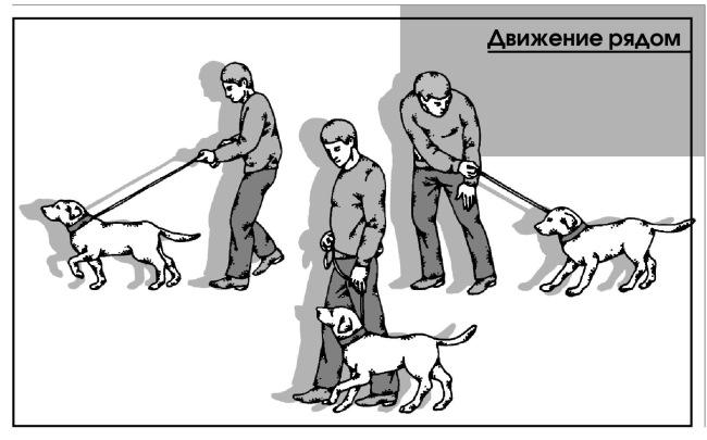 Как правильно дрессировать немецкую овчарку – щенка и подросшую собаку