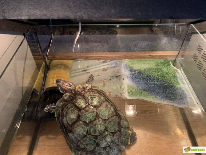 Как сделать аквариум (акватеррариум) для красноухой черепахи своими руками в домашних условиях