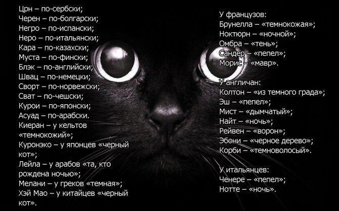Имена для серых котят мальчиков и девочек по алфавиту