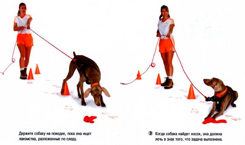 Как дрессировать немецкую овчарку: обучение, команды, рекомендуемый возраст, советы владельцам