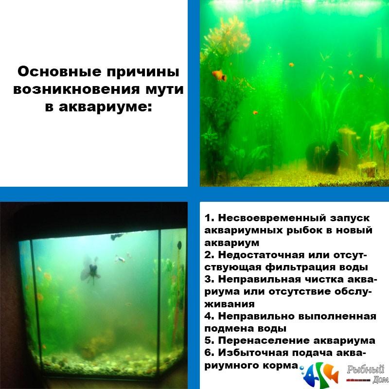 Ошибки, допускаемые начинающими аквариумистами при установке и запуске аквариума (часть 2)
