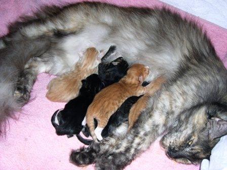 Можно ли глистогонить беременную кошку и не вредно ли это