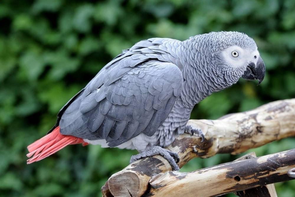 Попугаи жако: уход и содержание, условия, корм, клетка