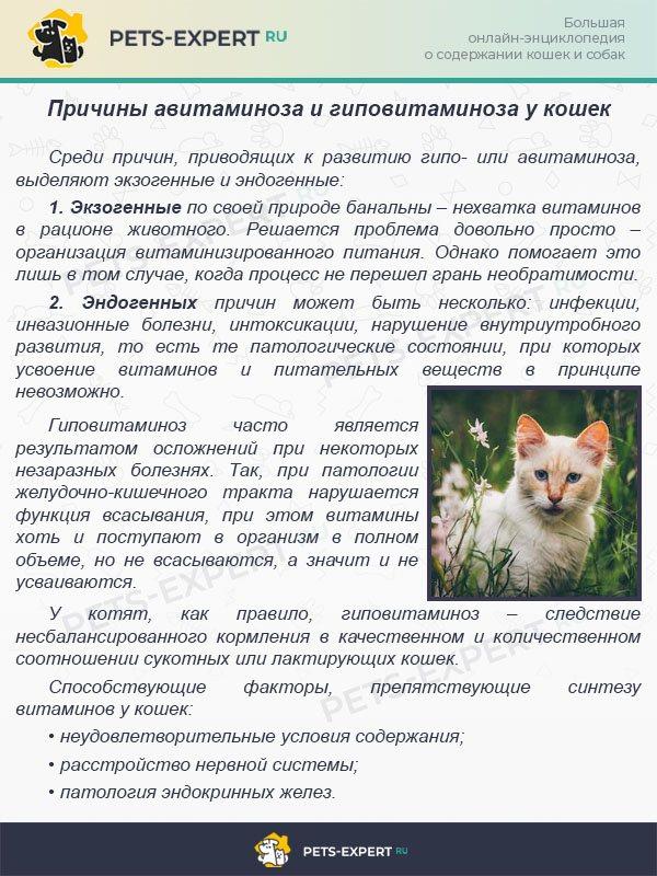 Аллергия у кошек — как проявляется и чем лечить