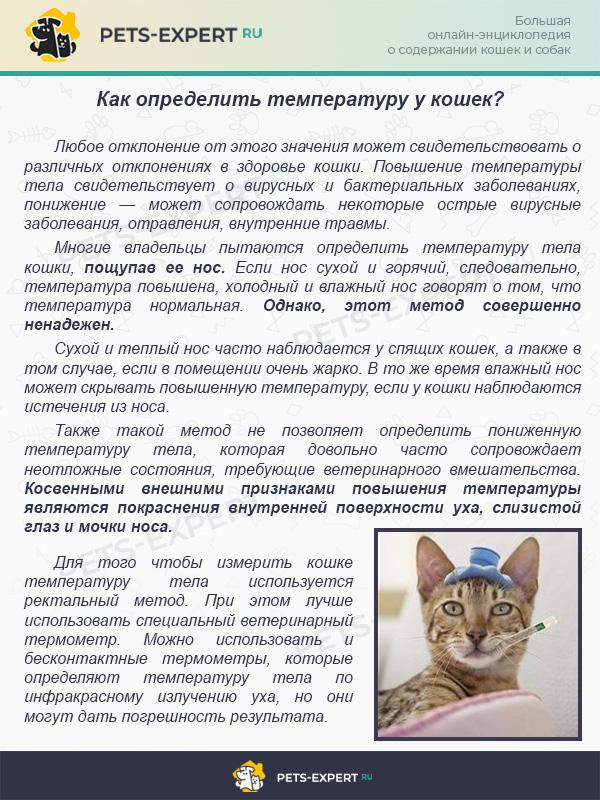 Отравление у кошки — симптомы | ветмед