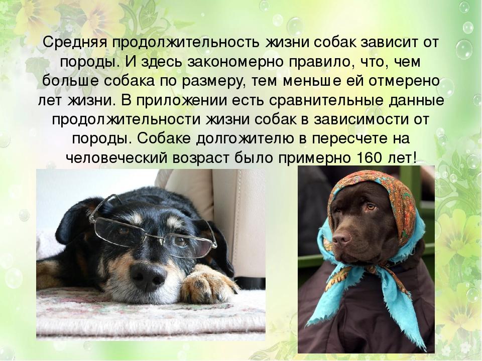 Самые долгоживущие собаки крупных пород