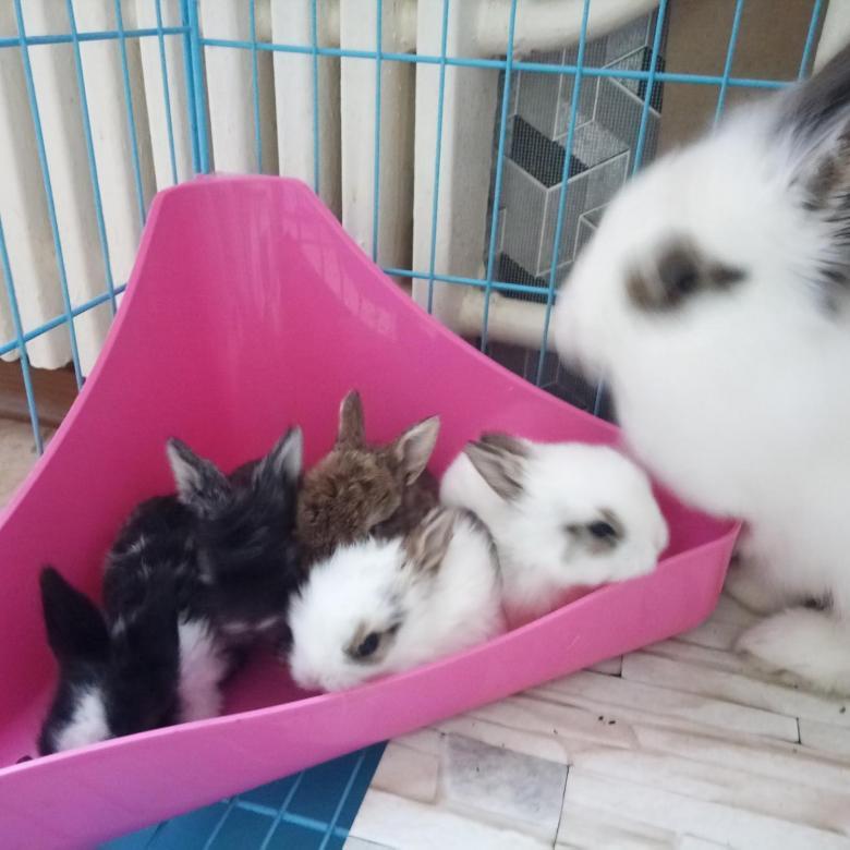 Сколько стоит живой домашний кролик
