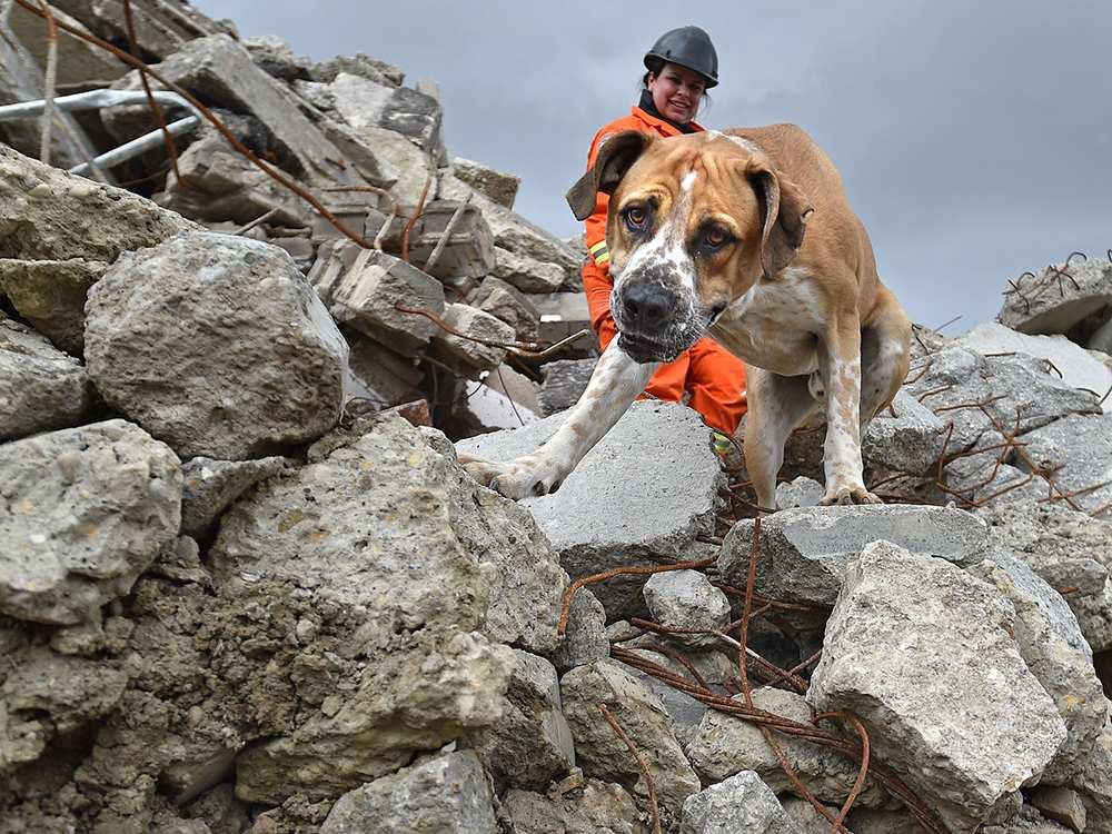 Собаки-спасатели (29 фото): популярные породы, которые помогают спасать альпинистов в горах и людей из воды
