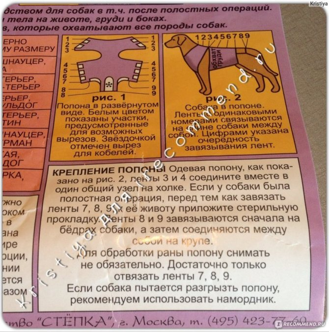 Попона для кошки: выбираем и шьем прогулочную, применяемую после стерилизации, домашнюю