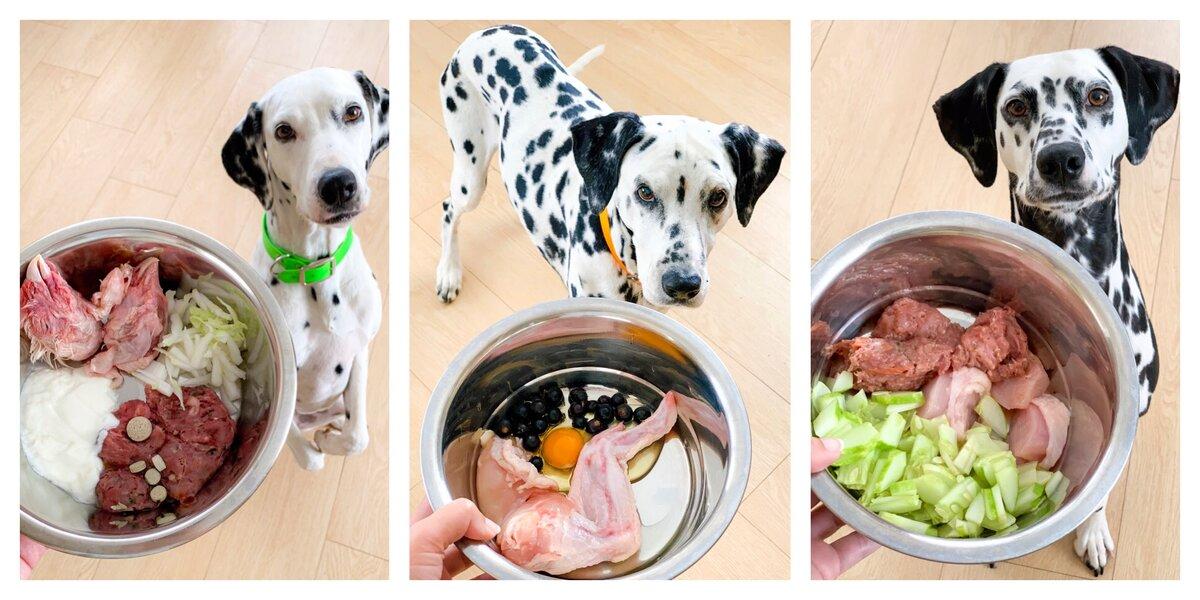 Список продуктов, чем кормить мопса — что едят мопсы в домашних условиях