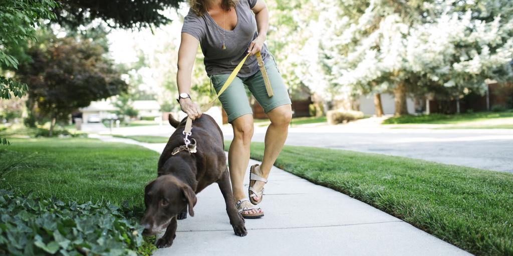Как гулять с собакой правильно: особенности и нюансы