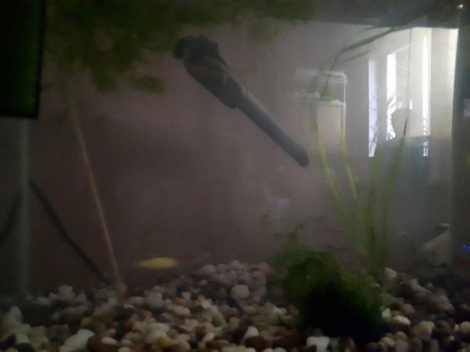 Почему желтеет вода в аквариуме: от чего и что с этим можно быстро сделать, чтоб она стала прозрачной вновь