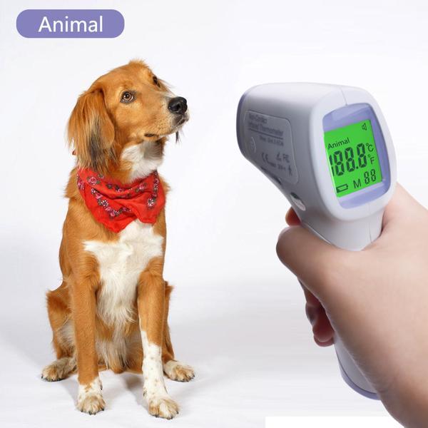 Как померить температуру у собаки?