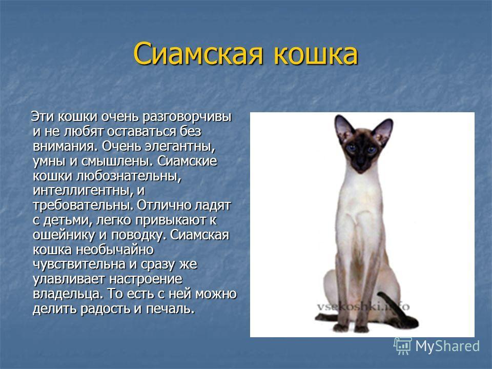 Сиамская кошка: фото, а также описание породы и характера