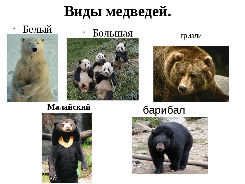 Бурый медведь: описание животного, где живет, чем питается