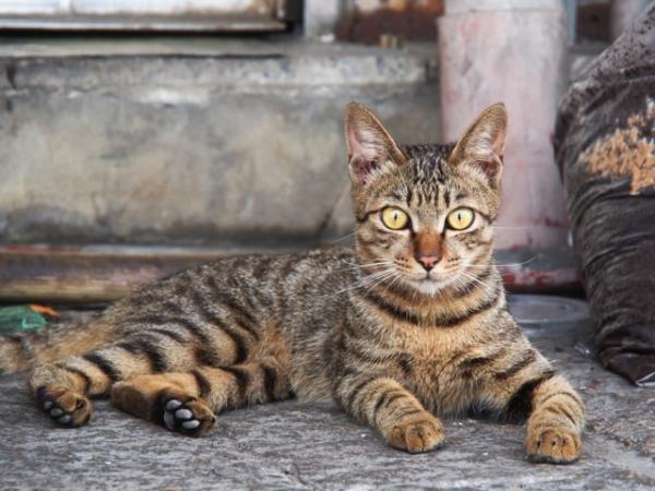 Как отучить кота и кошку гадить в неположенном месте