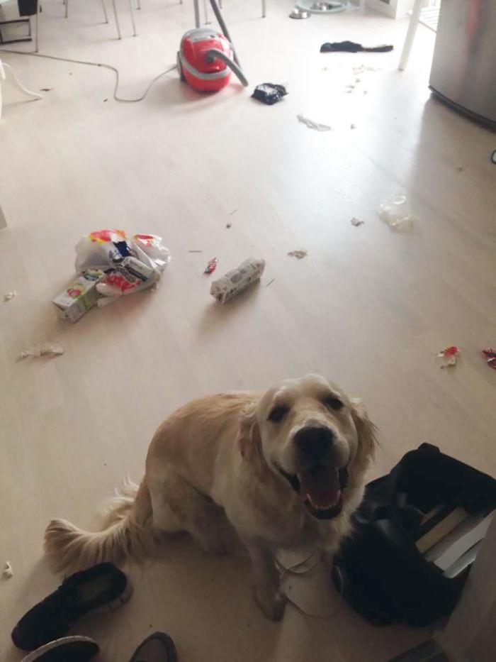 Как отучить собаку выть в отсутствие хозяев: причины такого поведения