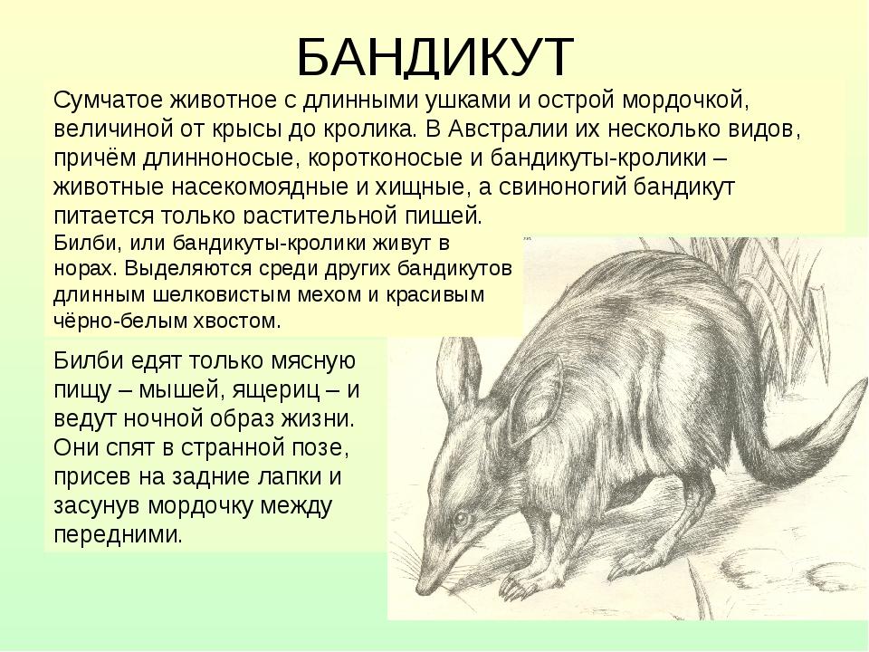 Дикобразы (hystricidae): интересные факты, фото, виды, образ жизни, ареал, что едят, сколько живут,