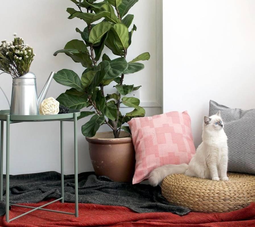 Что важнее для кошки: комфортный дом или любящий человек - gafki.ru