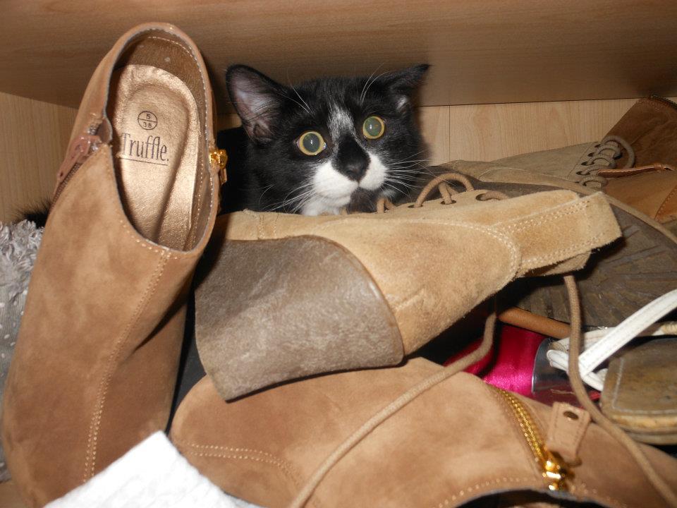 Как приучить кота приносить тапки