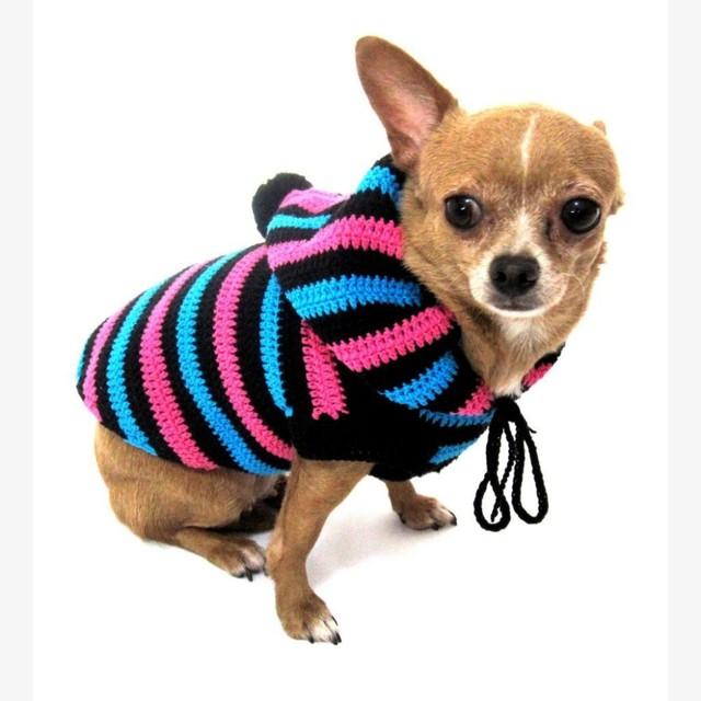 ᐉ порода собак длиношерстной чихуахуа: описание, уход, цена и фото щенков - zoovet24.ru