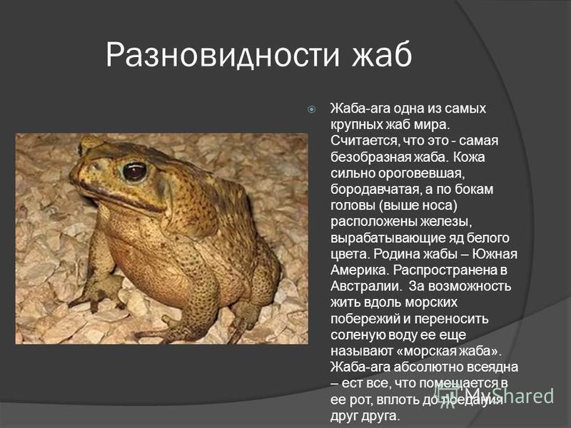 Земляная жаба. описание, особенности, виды и среда обитания земляной жабы | живность.ру