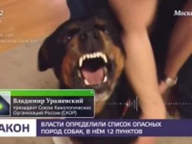 """Мвд опубликовало список 70 пород собак с агрессивной и """"нелояльной человеку"""" генетикой"""