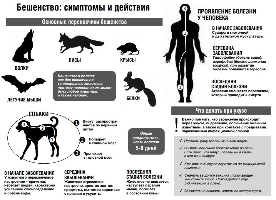 """Опухоли селезенки у собак и кошек  - симптомы и лечение в москве. ветеринарная клиника """"зоостатус"""""""