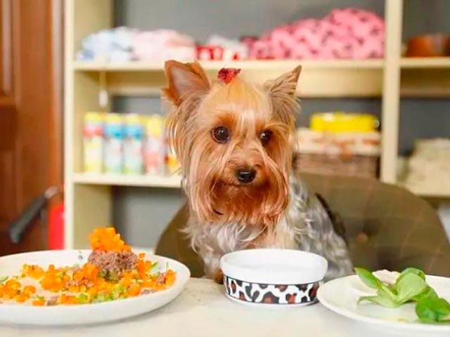 Питание йоркширских терьеров: еда для взрослых собак и щенков