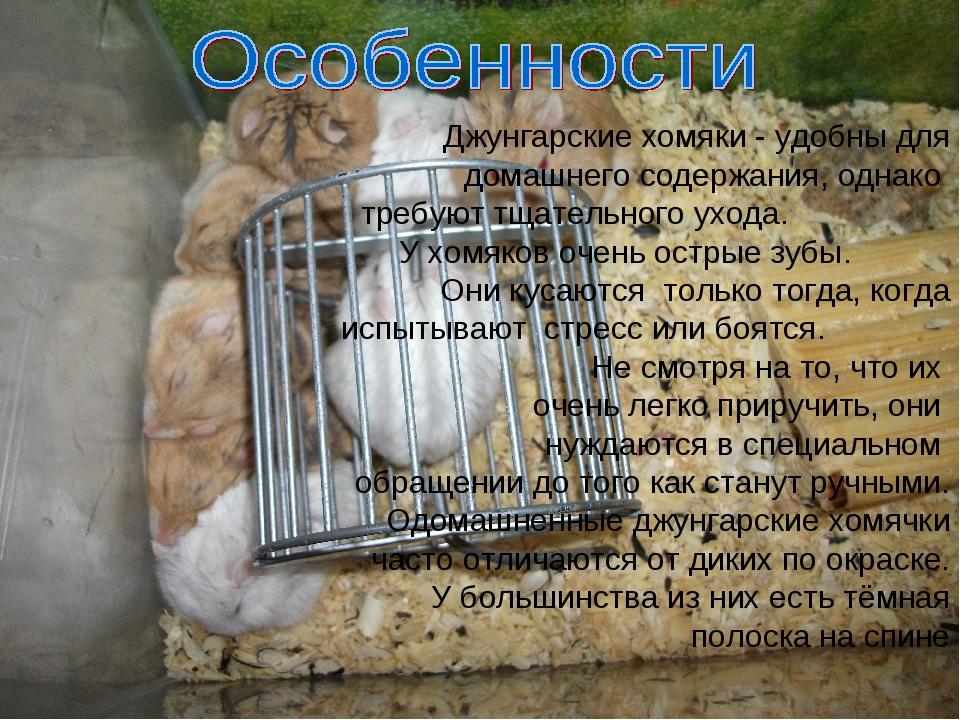 Джунгарик - самая полная информация - люблю хомяков