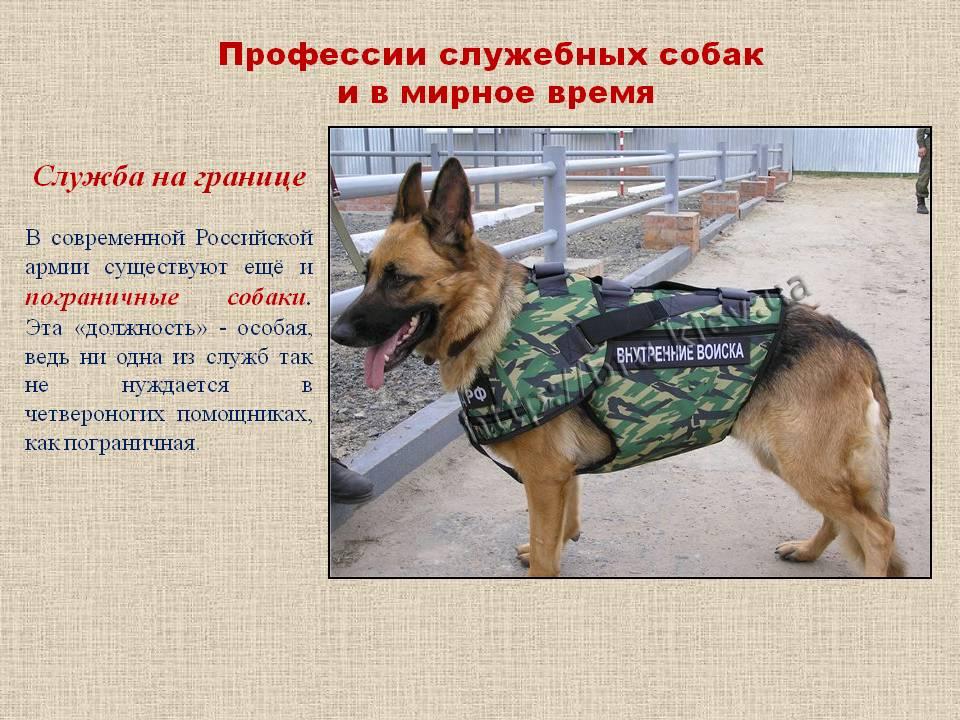Популярные породы собак: группы и виды, названия и фотографии, характеристика щенков и нюансы выбора